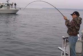 Tips Umpan Jitu Mancing Ikan Di Laut