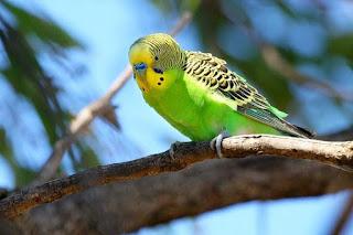 Kisaran Harga Pakan Burung Parkit Terbaru Saat Ini Dan Terlengakap