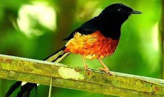 Manpaat Dan Harga Terbaru Vitamin Untuk Meningkatkan Nafsu Makan Burung Kicau Saat Ini Paling Lengkap
