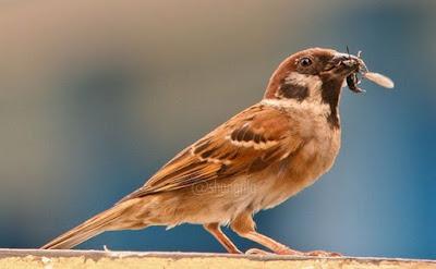 Berbagai Jenis Serangga Berbahaya Yang Dapat Mengakibatkan Burung Sakit Hingga Mati