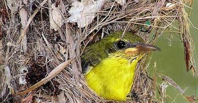 3 Tips Dan Cara Mudah Meloloh Burung Kolibri Anakan Agar Tetap Hidup Paling Lengkap
