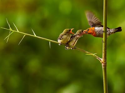 Mengetahui Tempat Sarang Burung Kemade Di Alam Liar Paling Akurat