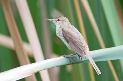 Mengetahui Lebih Dekat 3 Jenis Burung Kerakbasi Yang Ada Di Habitat Alam Bebas
