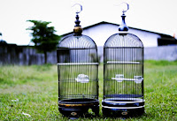 Sangkar Burung Lovebird BBF